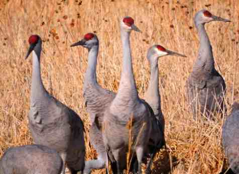 With Nation Distracted by Public Health and Economic Crises, Trump Moves to Allow GMO Crops in Wildlife Refuges
