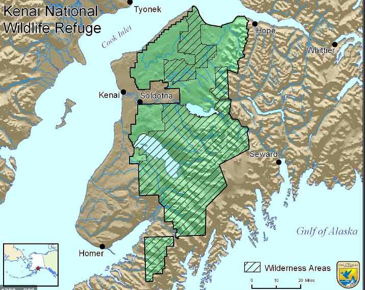 Trump Administration Revokes Protections for Brown Bears, Other Wildlife in Alaska's Kenai National Wildlife Refuge
