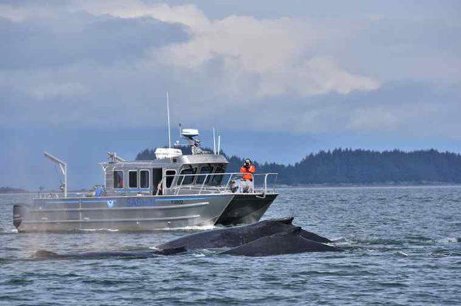 Scientists watch humpback whales near Juneau. Credit: Bruce Baker