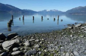 Pilings from a wharf at the former town of Valdez that waves destroyed afterthe Great Alaska Earthquake of March 1964. Image-Ned Rozell.