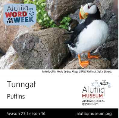 Puffin-Alutiiq Word of the Week-October 11th