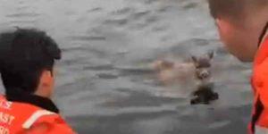 Coast Guard video courtesy Station Ketchikan