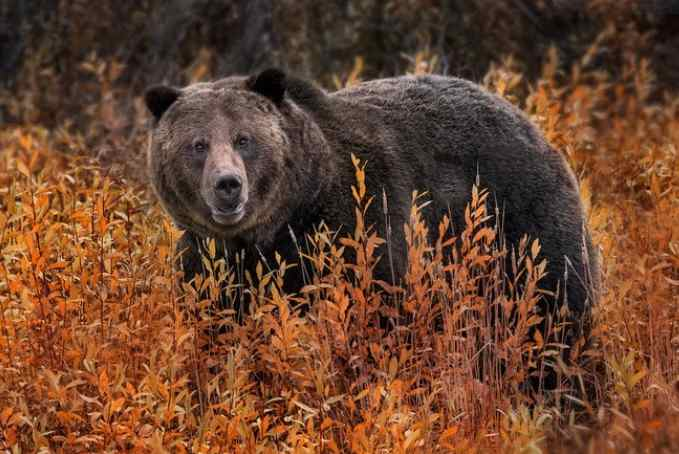 'Most Anti-Wildlife President in History' Puts Out Lame Duck Rule to Gut Species Protection
