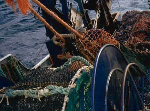 NMFS Prohibits Directed Fishing for Deep-Water Species by Gulf Trawlers