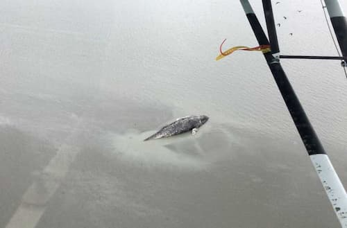 NOAA Reports Second Dead Large Whale in Turnagain Arm